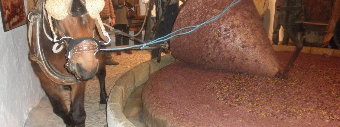 Riogordo homenajea a la cultura del aceite de oliva virgen extra verdial