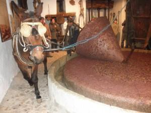 Aceite de Oliva Virgen Extra Verdial - Molienda en Riogordo