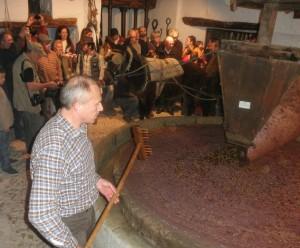 Durante la jornada del sábado de molerá aceitunas en un molino del siglo XVIII.