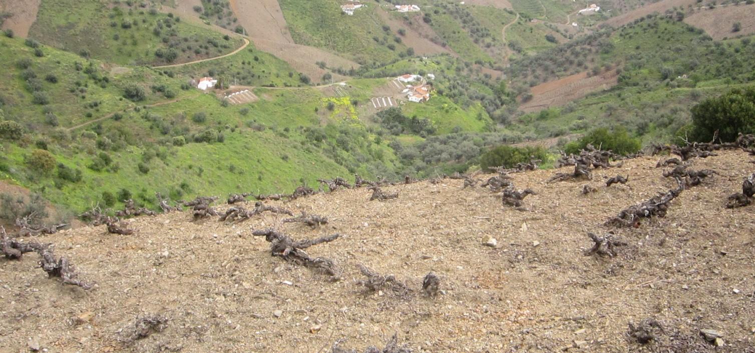 Camino de la Cornisa