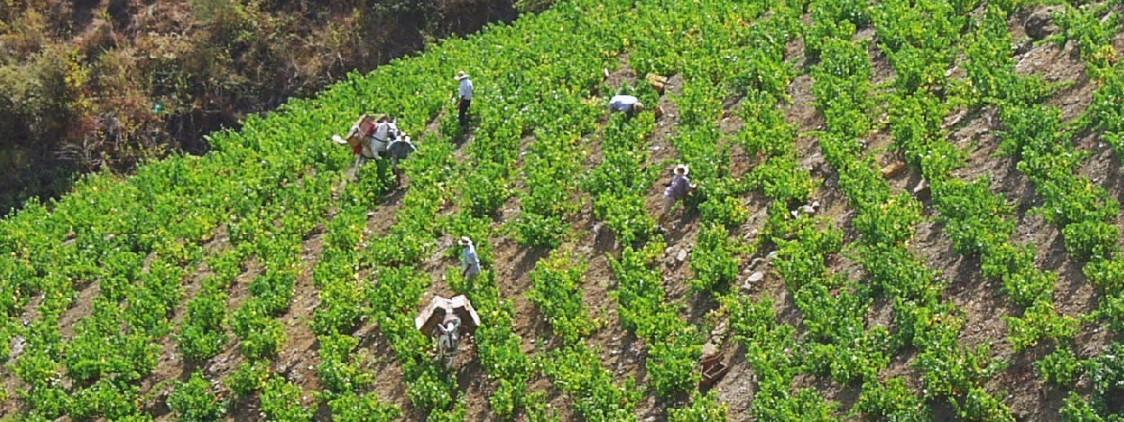 El espíritu del vino moscatel malagueño
