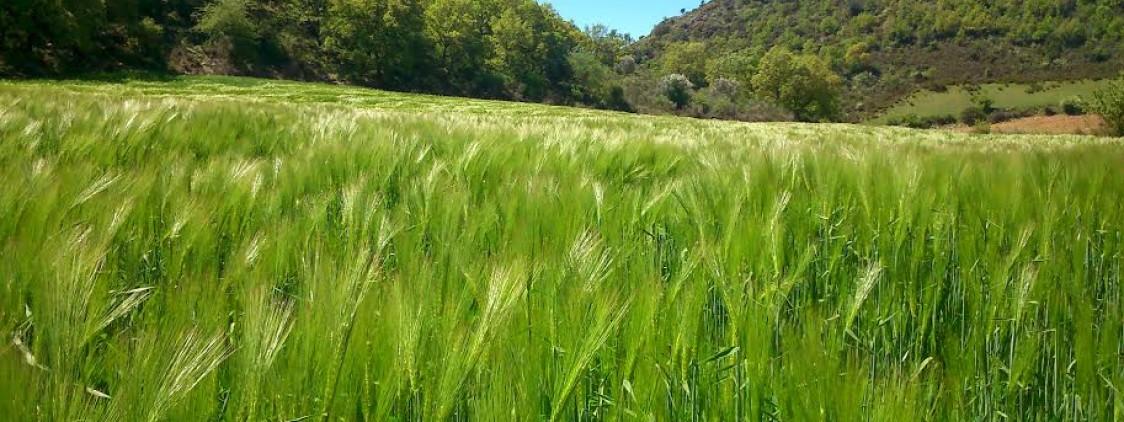 El 'granero' de Málaga