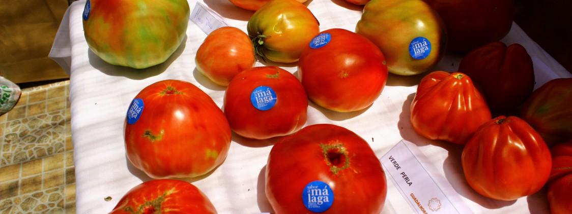 Concurso de los mejores tomates del Guadalhorce