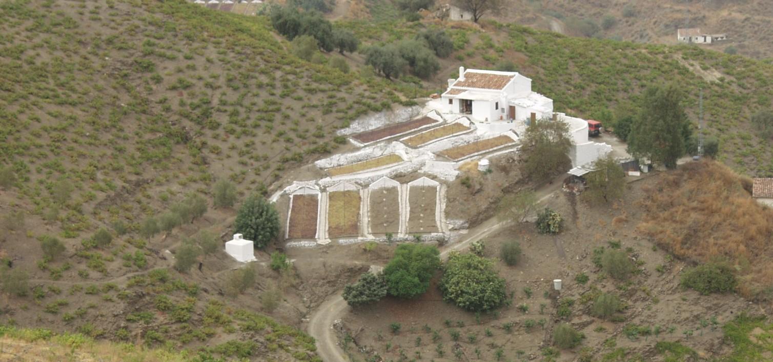 Ruta de la Pasa Moscatel – Paseros en El Borge.