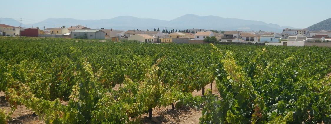 Ruta del vino por Mollina