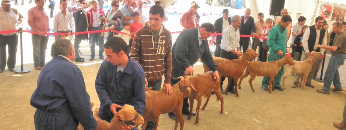 Feria de Ganado de Villanueva de Tapia