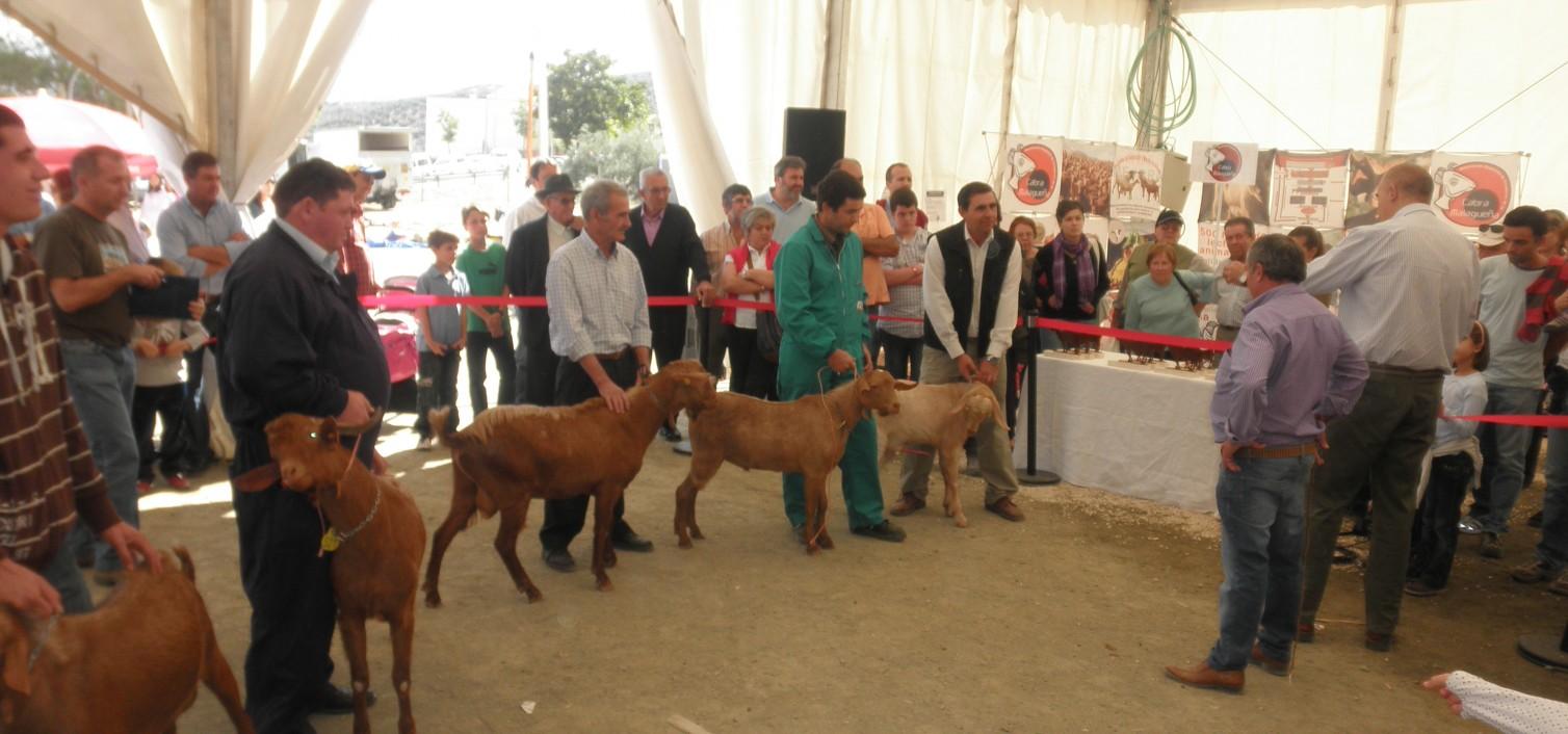 Real Feria de Ganado de Villanueva de Tapia