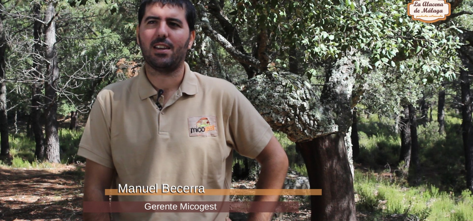 Temporada de Setas en la Serranía de Ronda (I) – Jornada Micológica con Manuel Becerra y Micogest