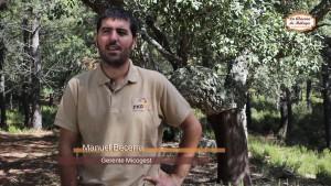 Temporada de setas en malaga. Manuel Becerra de Micogest