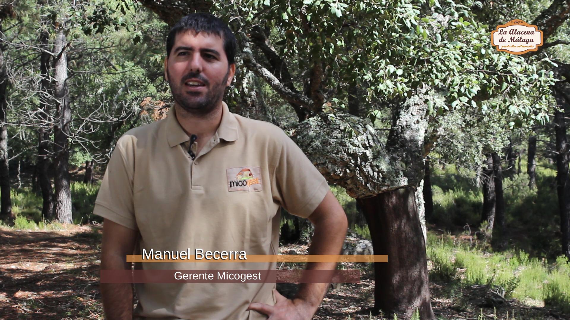 Temporada de setas en malaga manuel becerra de micogest for Piscina 02 manuel becerra