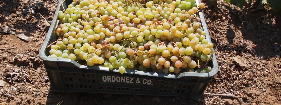 Bodegas Jorge Ordóñez duplica la producción de su vino Botani Espumoso