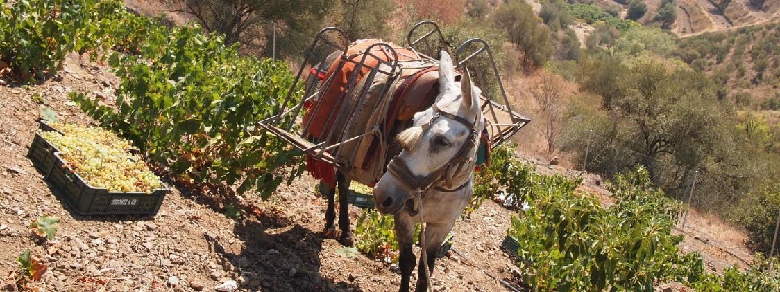 El vino Botani moscatel Victoria Nº2 en la gala de presentación de la Guía Michelín