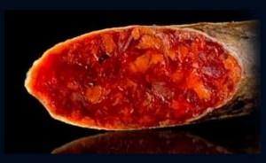 Chorizo Dehesa de los Monteros