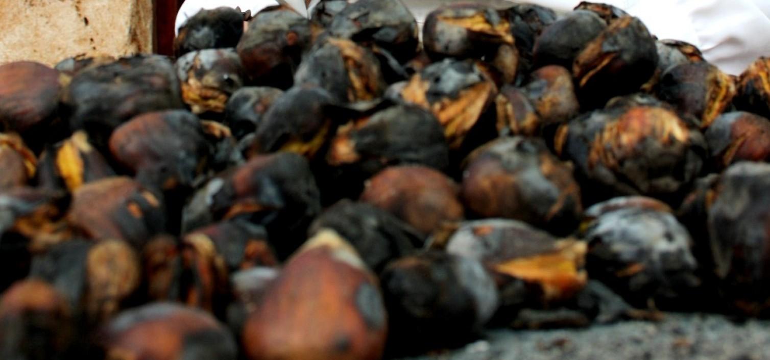 Fiestas de la castaña en Alcaucín y Ojén 2015