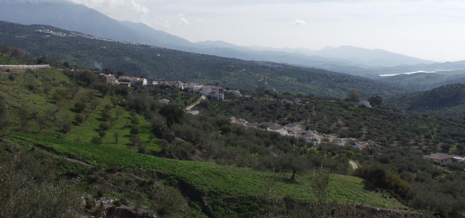 Día del Aceite Verdial en Periana