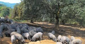 Embutidos de Malaga 100% ibéricos - La Dehesa de los Monteros
