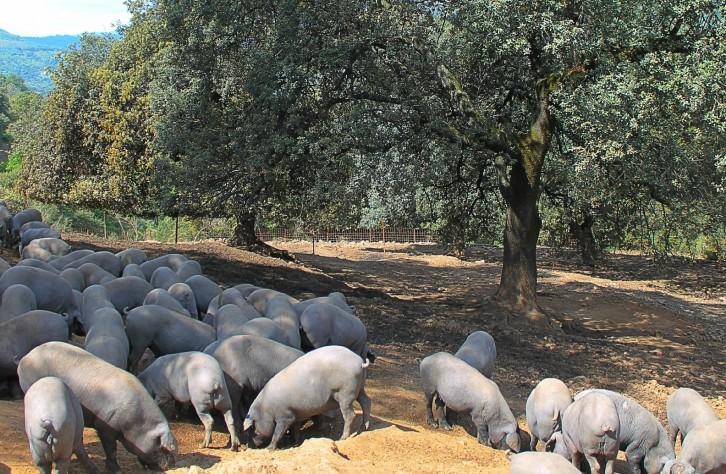Embutidos ibéricos de Málaga – La Dehesa de los Monteros