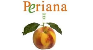 El melocotón es la fruta estrella del verano en Periana.