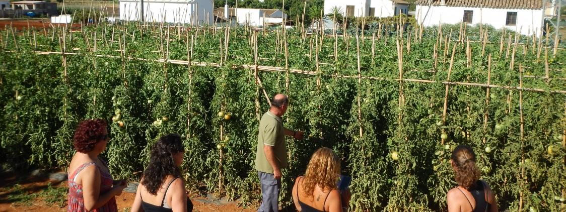 6 razones para consumir productos ecológicos de Málaga