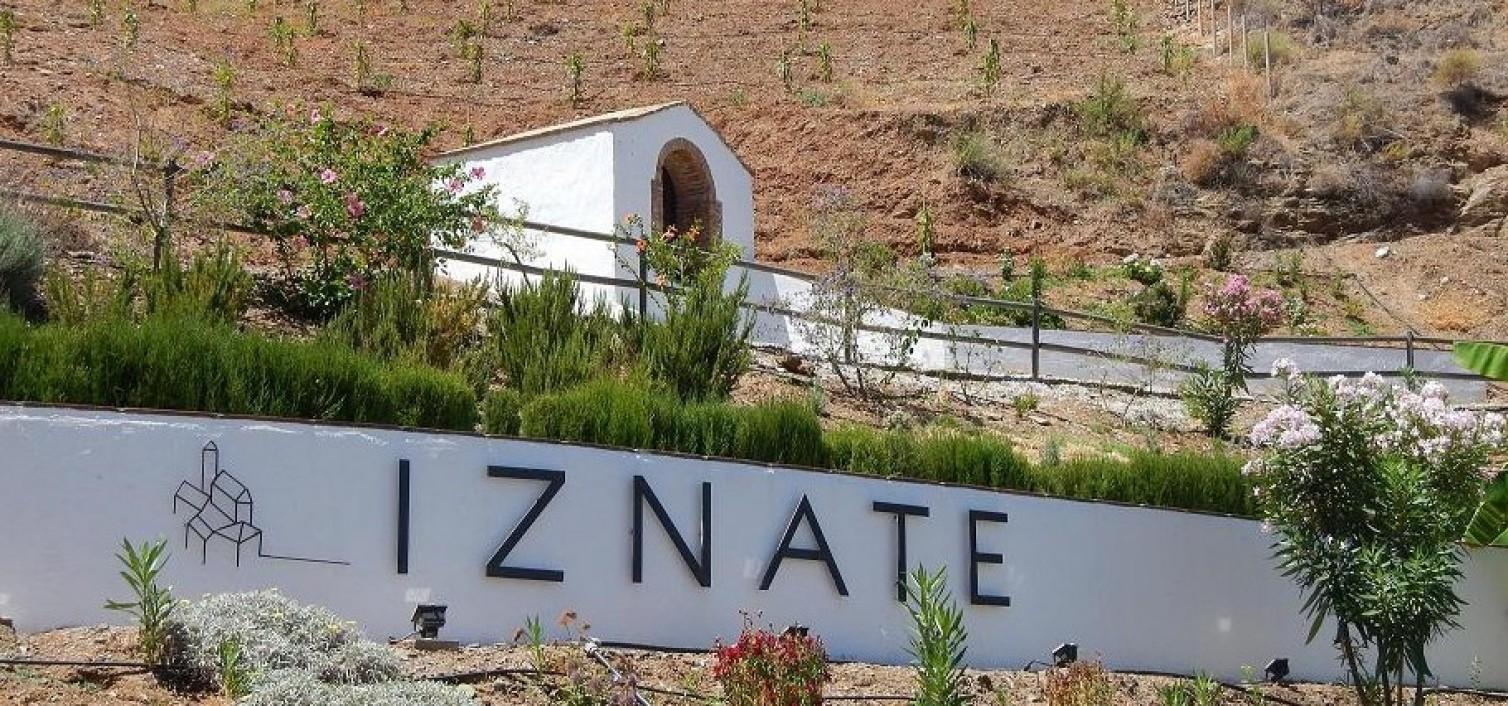 XVII día de la uva moscatel en Iznate 2015