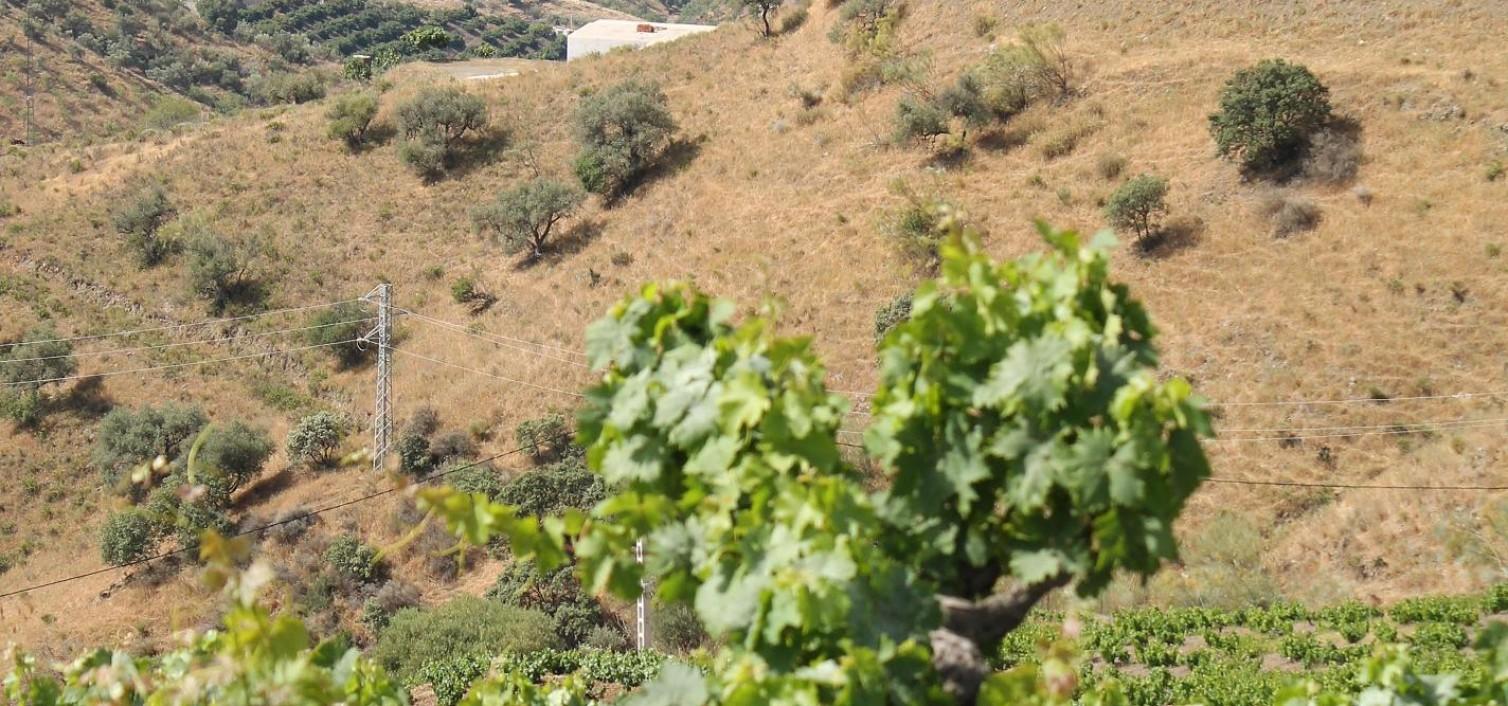 Viñas Moclinejo