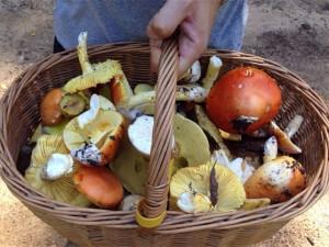 La deliciosa amanitas cesarea, un manjar de dioses.