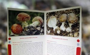 """Setas tóxicas (del libro """"Setas comestibles y tóxicas de Andalucía""""."""