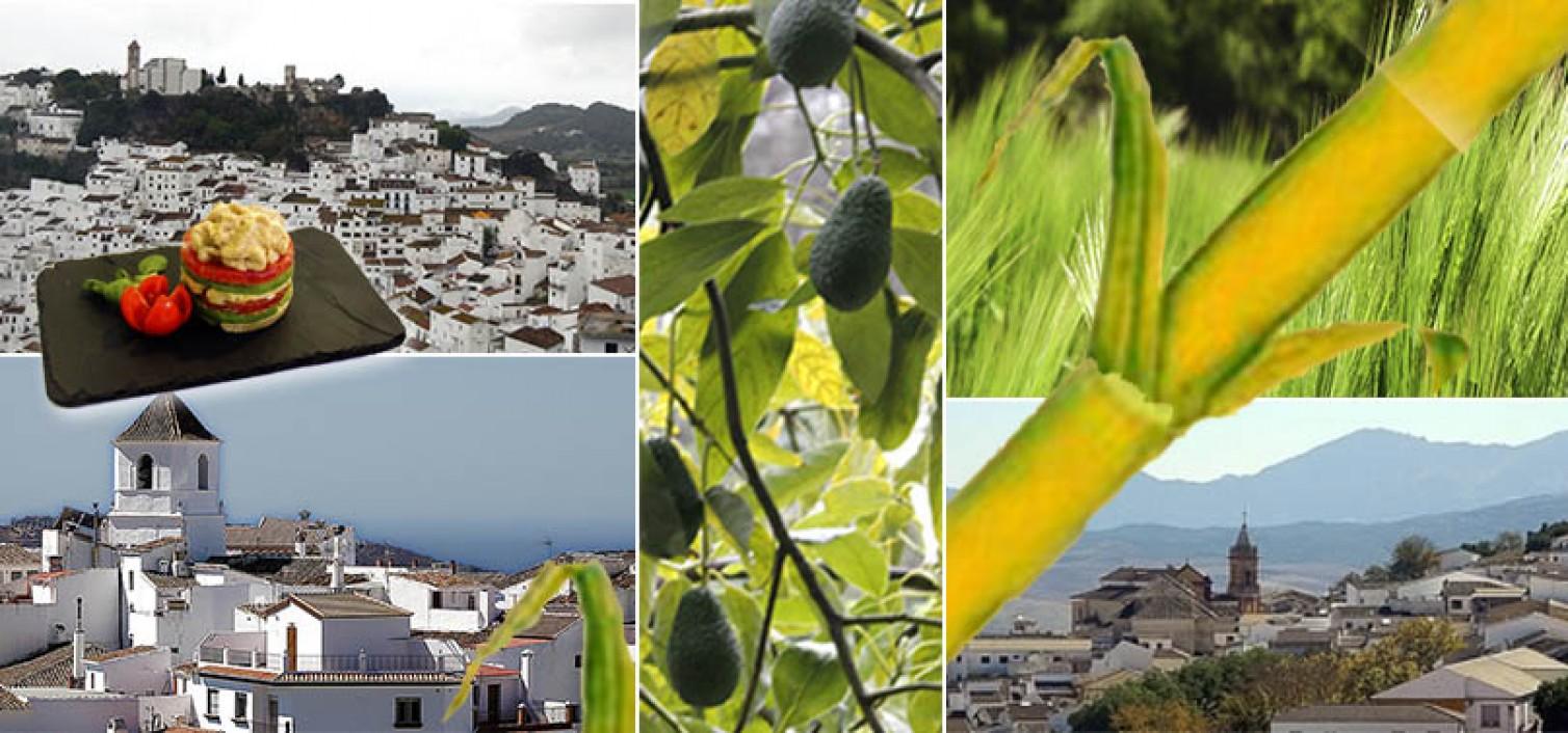 12 fiestas gastronómicas que no te puedes perder en abril en Málaga