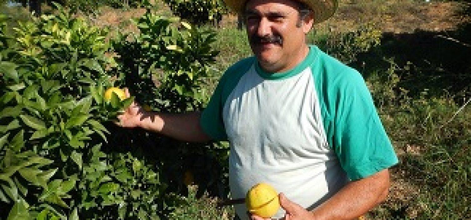Juanito Orange