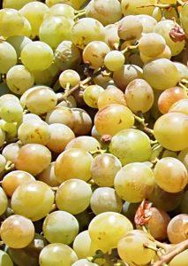Uvas moscatel de Málaga.