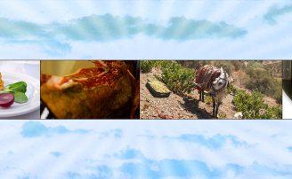 9 eventos gastronómicos en agosto en Málaga