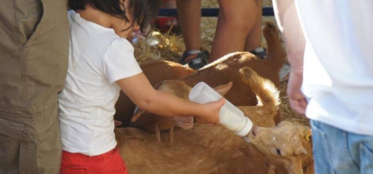 Fiesta de la Cabra Malagueña 2016