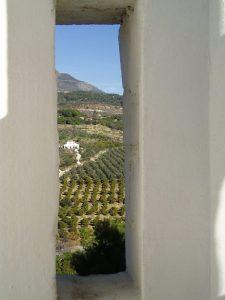 Olivos de la variedad aloreña en la Sierra de las Nieves.