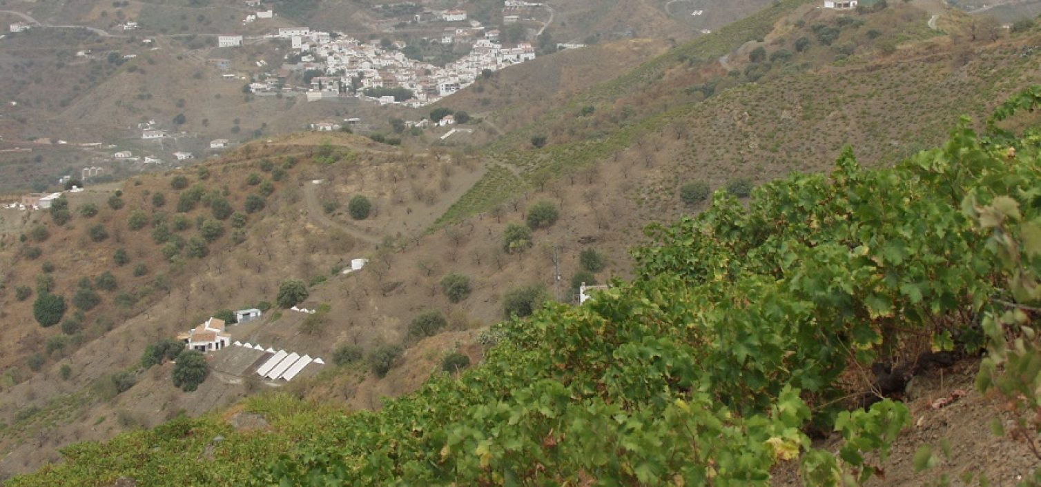 Día de la Pasa en El Borge 2016
