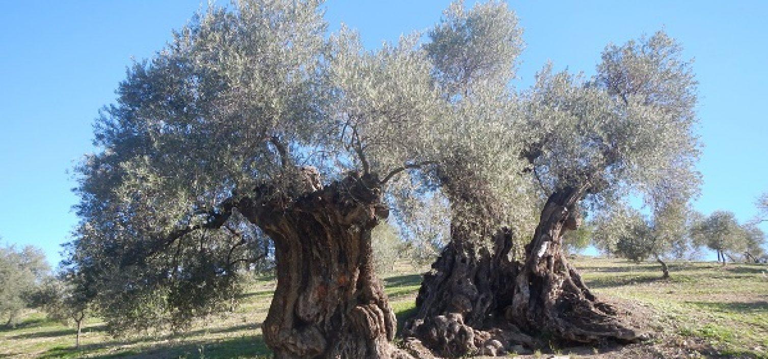 6 rutas gastronómicas en Málaga para esta primavera