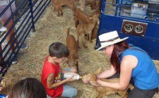 Fiesta de la Cabra Malagueña 2017