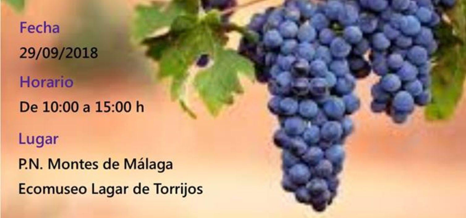 Fiesta de la Vendimia de los Montes de Málaga.