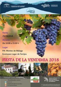 Fiesta de la Vendimia de los Montes de Málaga en el Ecomuseo Lagar de Torrijos.